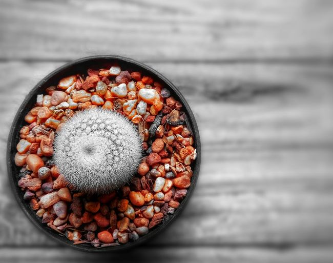 Little cactus on the wooden ground with splash color of stone for art and design photography Pot High Angle View Blackandwhite Mix Natural Cute Close-up Ornamental Plant Arrangement Background Texture Decoration Wooden Flat Lay. Plant Cactus Design Art Splash Growth Beauty Little EyeEm Selects No People Close-up Indoors  Day Freshness