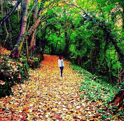Sonbahar Istanbuldasonbahar Doğa Huzur Autumn Autumn Colors Nature Forrest Forrest Photography