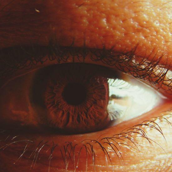 Dark Brown Eyes Macro Photography Nikon