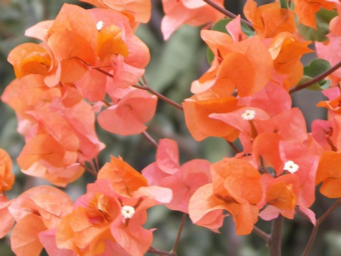 EyeEm Flower Flowers Colors Salmon Colored