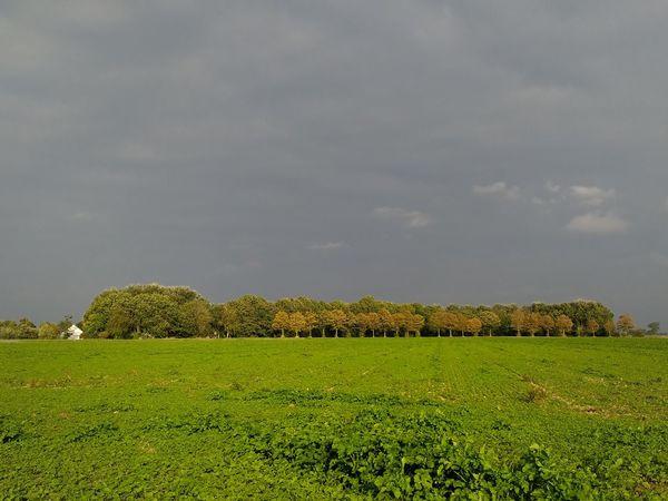 Autumn trees EyeEm Market © Sky Landscape Scenics Zeeuws Vlaanderen Zeeland  The Netherlands Autumn Colors Dark Sky Cloud