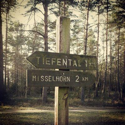 Tiefental - Misselhorn