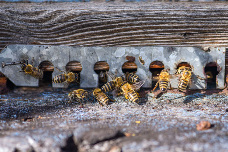 High angle view of bees on old wooden bee house