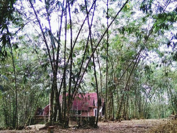古来小普陀寺 Tree Day Nature No People Outdoors Green Color