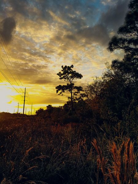 Shadows & Lights Goldenhour Florida Art By Nature Summer Colors Natures Canvas Canvaseffect Nature Photography EyeEm Nature Lover Protecting Where We Play