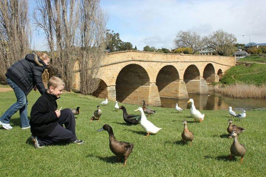 Richmond, Tasmania- Historic Bridge. Nature Fun Animals Bridge Enjoying Life Ducks Australia Tasmania History Through The Lens  Hanging Out