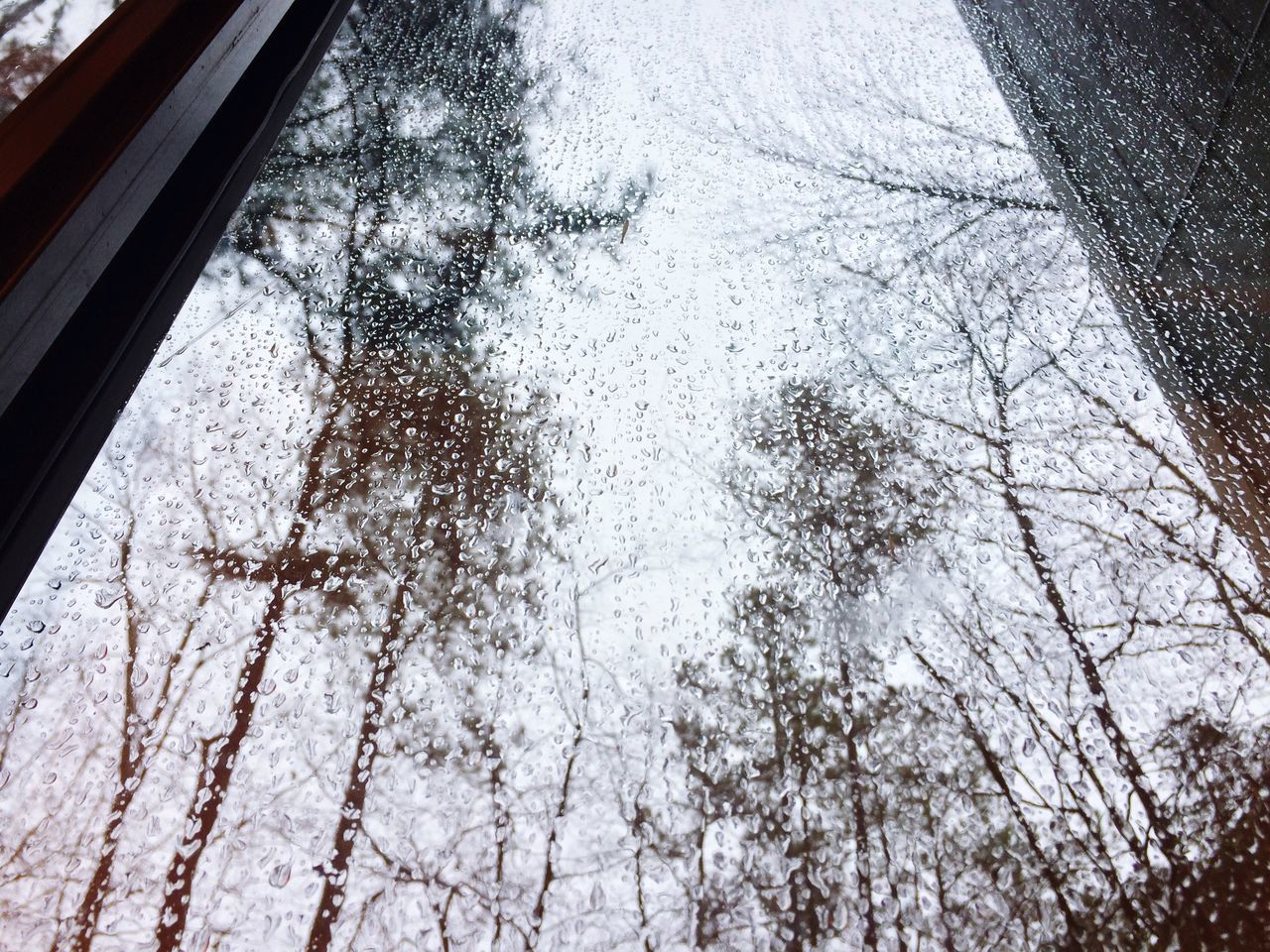snow, tree, winter, cold temperature, day, no people, low angle view, nature, outdoors, beauty in nature, close-up, freshness