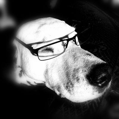 Human Eye Eyeglasses  Human Face Headshot Portrait Men Serious Close-up