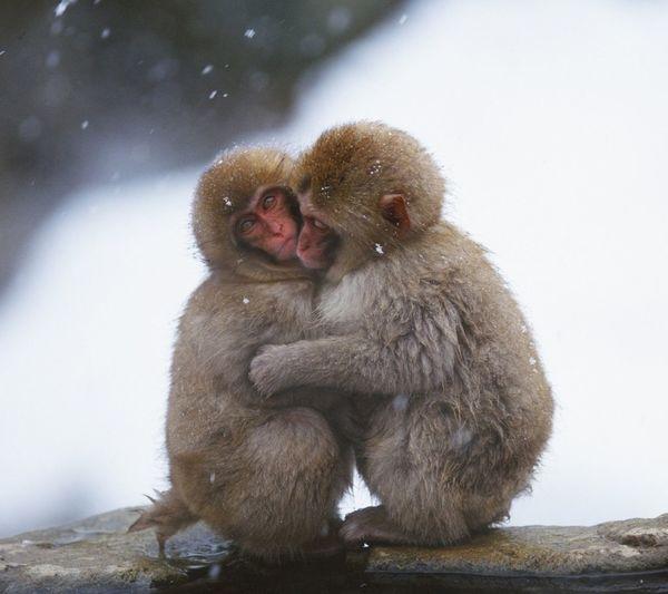 Monkeys looking away outdoors