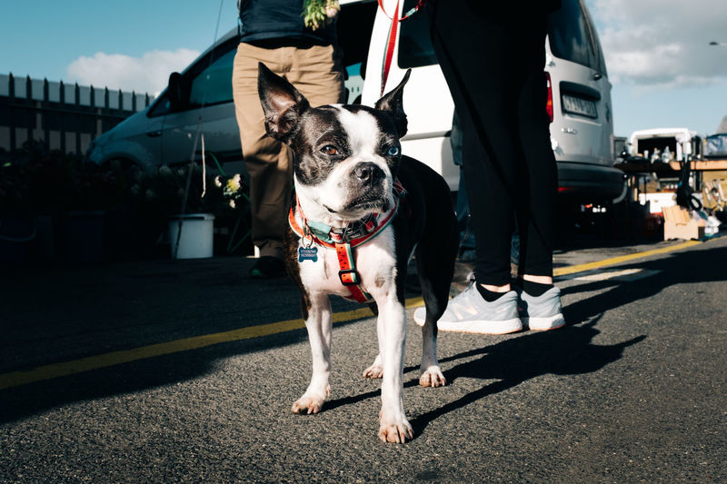 Animal Animal Themes Canine City Dog Domestic Domestic Animals Leash Mammal Nature One Animal One Person Outdoors Pet Leash Pet Owner Pets Real People Shadow Sunlight Transportation Vertebrate
