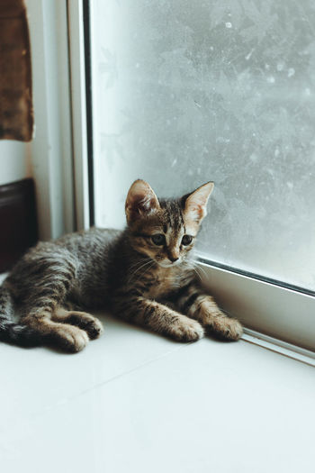 Portrait of cat on window at home