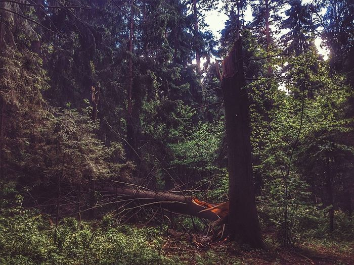 Moscow Park Forest Summer2017 шторм