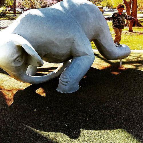 🐘 Found On The Roll Taking Photos Topekazoo Topeka Elephant Art