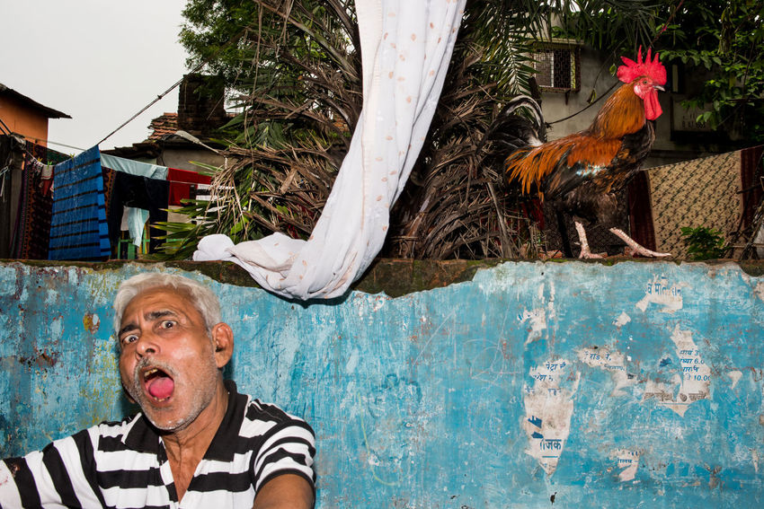 #Blue #animal #chicken #color #flash #life #man #streetphotography #wall