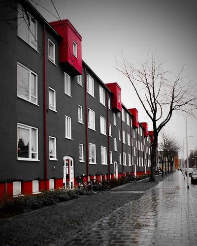 Streetview Thehague  Netherlands Canond500 Canon500d Pic Pictures Photographer Instalike Instagram Red Blackandwhite Artitecture RainyDay Bored Appartement Trees Winter Cold