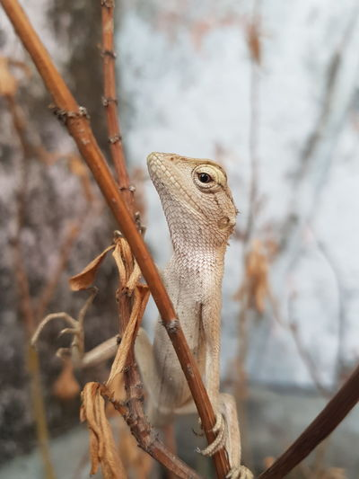 Close-up of lizard on dried plant