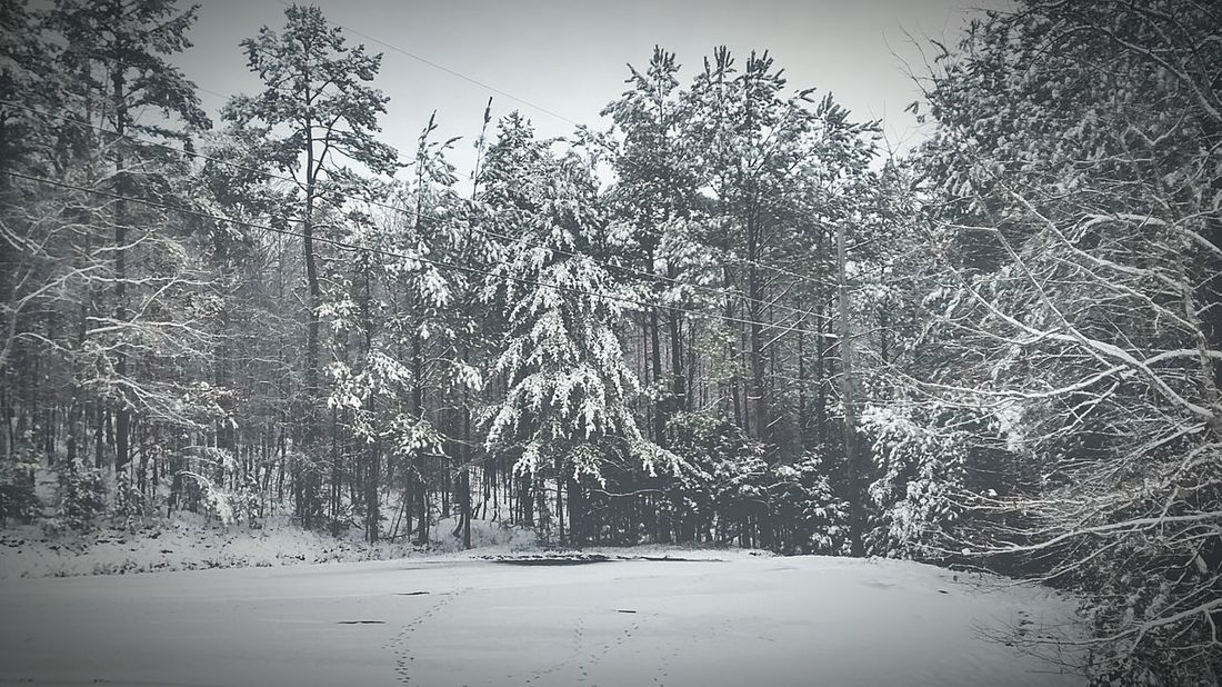 Cold Temperature Beauty In Nature Winter Outdoors No People Snowing Forest Snow EyeEm Nature Lover Life's Simple Pleasures... EyeEmbestshots EyeEm Gallery Nature Photography Awesome_nature_shots Wow_america_landscape Beauty In Nature Landscape Followfriday