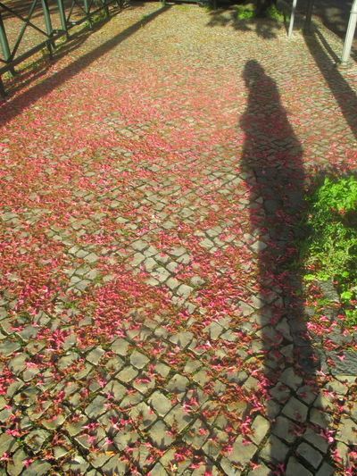 Adult Autumn Beauty In Nature Beauty In Nature Cobblestone Day EyeEmNewHere Fragances Of Lisbon Freshness Growth Leaf Lifestyles Lonely Woman Nature One Person One Woman Only Outdoors People Petals On The Ground Plant Real People Romantic Pictures Shadow Shadow Of A Woman Tree The Street Photographer - 2017 EyeEm Awards