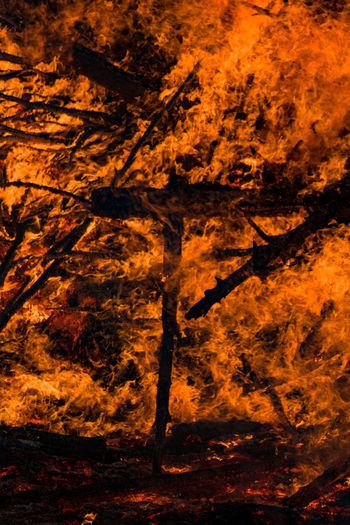 Fire Burning Fire - Natural Phenomenon Flame Heat - Temperature Nature Sign Communication Warning Sign Burnt No People Tree Destruction Night Forest Fire Orange Color Ash Forest Smoke - Physical Structure Backgrounds Inferno