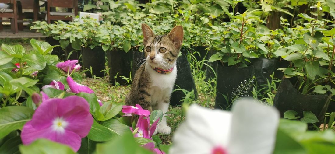 View of cat amidst plants