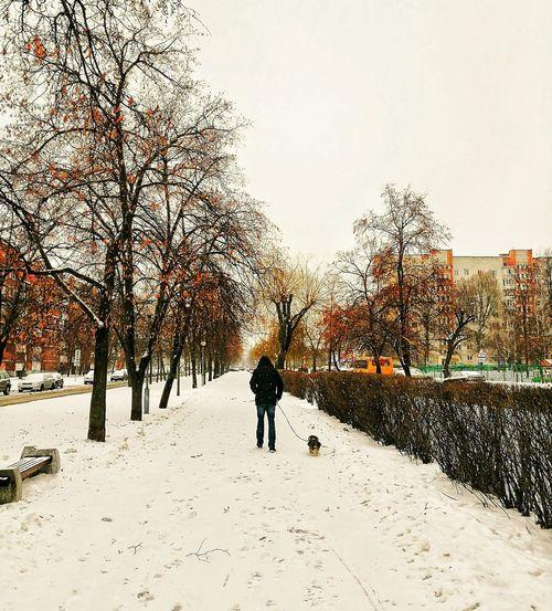 Берасце зімовае One Person People Nature Only Men Tree Sky Day Belarus Brest Brestgram Winter Belarusgram January2017