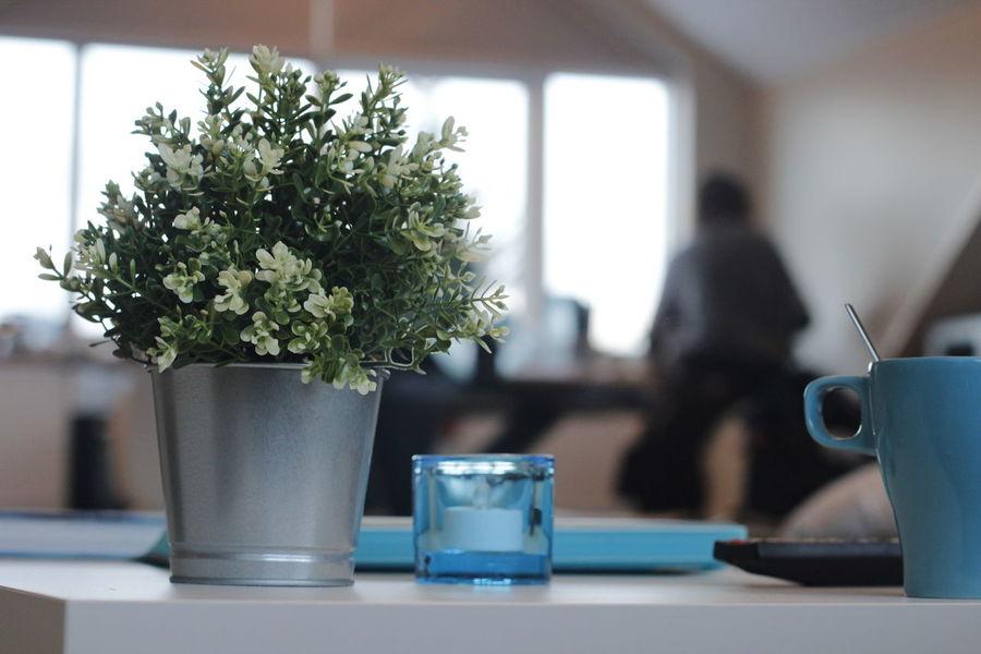 fake flowers Blue Cup Fake Flowers Morning Windows