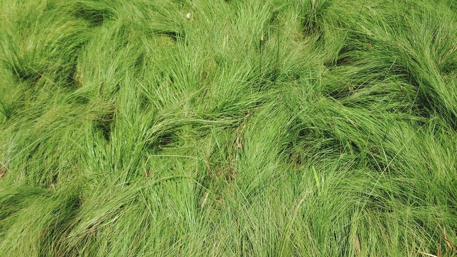 Backgrounds Full Frame Grass Close-up Growing Green Leaves