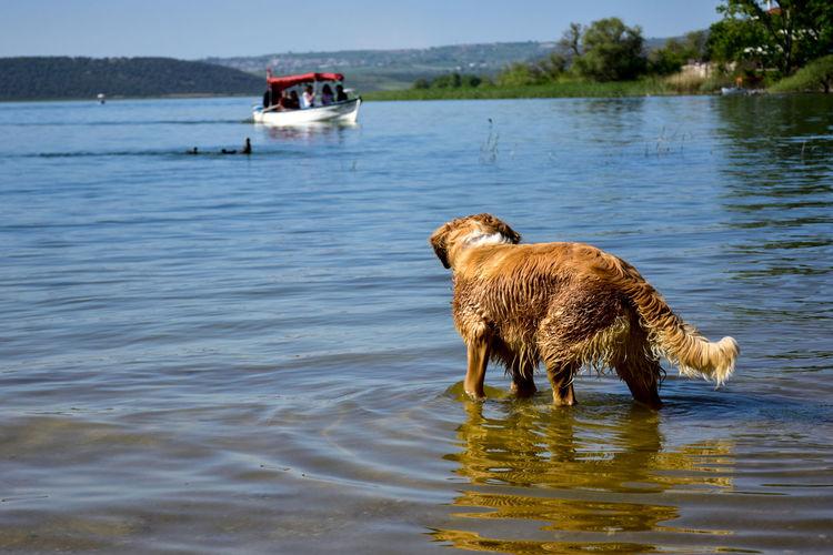 Gölyazı - Bursa - Türkiye Dogs Dogs Of EyeEm Lake Lake View Boats⛵️ Vocation Fishing Fishing Boats Apolyont Lake Bursa / Turkey EyeEm Best Shots EyeEm Nature Lover EyeEm Nature Lover EyeEm Gallery EyeEm Selects EyeEm EyeEm Best Shots - Nature Eyeemphotography EyeEm Selects Water Dog