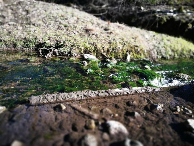 water in spring Water Moss Rock - Object Close-up Grass Flowing Water Stream Stone