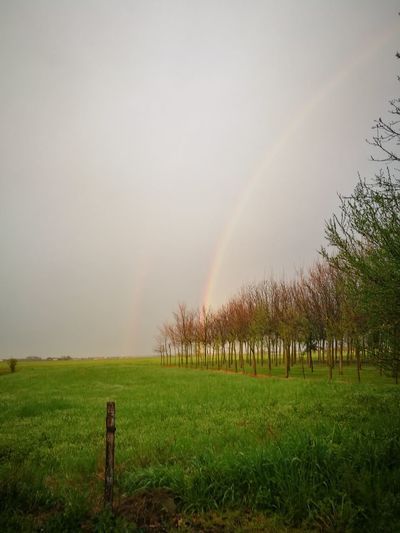 il mio giardino...💟 Tree Agriculture Rainbow Rural Scene Grass Sky Green Color Sprinkler Watering Double Rainbow Gardening Going Remote