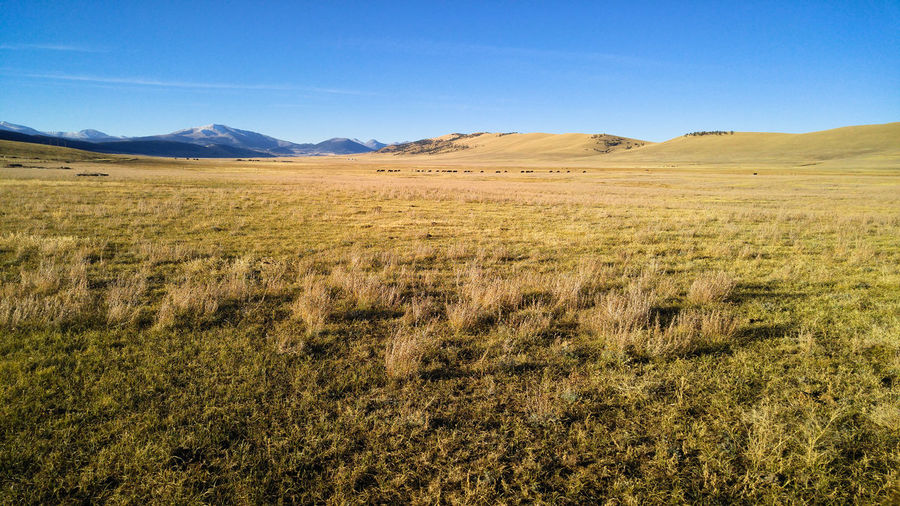 Beef Colorado Ranch Ranch Life South Park Blue Sky Cattle Cows Distance Field Grass Landscape Mountain Mountain Range Nature Ranching Rocky Mountains Silence Sky Solitude Sunset Tranquil Scene Tranquility Valley Wide Open Spaces