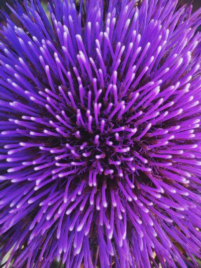 Full frame shot of purple flower