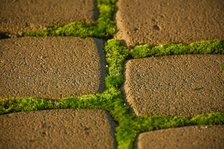 In between Green Green Color Stepstones Stonewalk Backgrounds Close-up Day Freshness Full Frame Moss Nature No People Outdoors Pattern Stepstone Stone Stone Walkway Stones Textured  Walkway