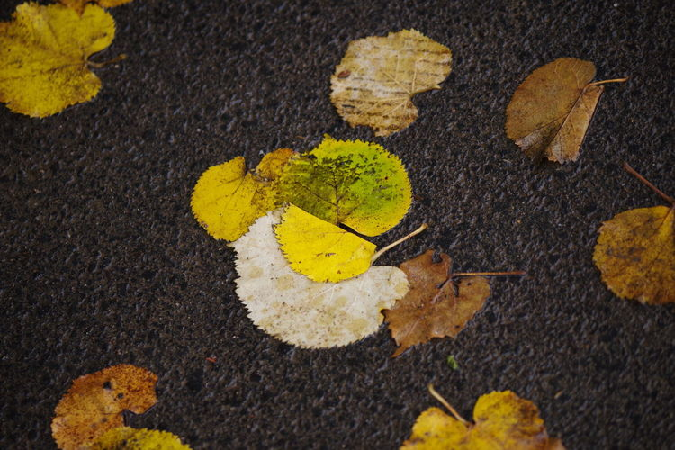 High angle view of autumn leaves on road
