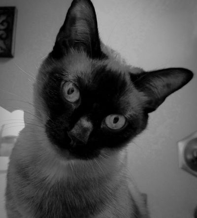 Shades Of Grey Kitty Cat Cats Of EyeEm Cat Eyes Meow Cheese! Black & White Cats Nooni One Animal What Are YOU Looking At? Pets No People Feline Check This Out Domestic Cat Check Me Out Animal Themes Domestic Animals Kittylove