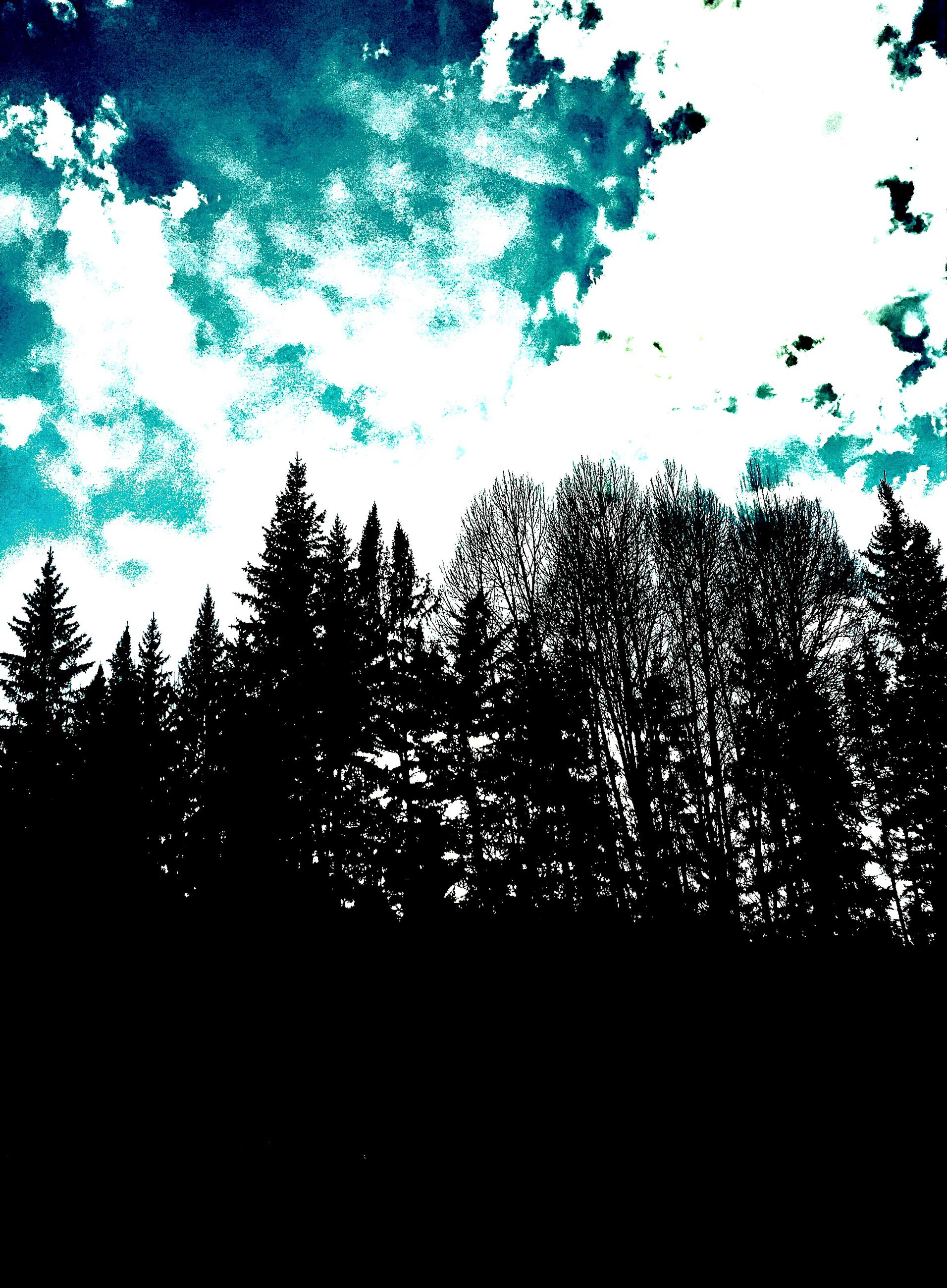 sky, nature, silhouette, no people, backgrounds, tree, growth, outdoors, beauty in nature, night, close-up