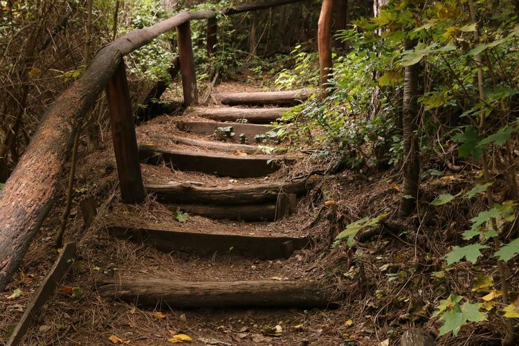 Steps And Staircases Steps Staircase Railing The Way Forward Tree Nature Day Stairs No People Outdoors Growth Forest Beauty In Nature Hand Rail