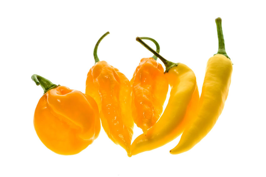 Different variety of yellow hot peppers - a bunch of chilies, isolated on white. Hot pepper Sarit Gat, Habanero Orange and Fatalii Yellow Capsicum Annuum Chili Pepper Green Hot Pepper Plant Bunch Capsaicin Capsicum Capsicum Chinense Capsicum Pepper Chili  Fatalii Fruit Group Habanero Homegrown Hot Peppers Isolated White Background Organic Organic Food Pepper Sarit Gat Studio Shot Vegetable Yellow