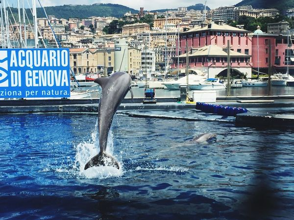 Delfines  Fisch Delfino Grey Swimming Pool Blue Blue Sea Happydays😎 Goodtime Moment Animals Around Genova Italy Enjoying Life Taking Photos Hello World Hi! Poisson 🐟 Aquarium Love Is In The Air Love ♥