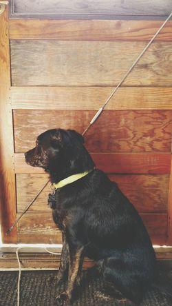 Dogdays Dogdaysofsummer Impatient Pup