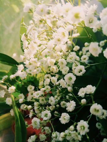 Part of the flowers for my mom Beautiful Macro Israel Sjmike Idf Flowers Meizumx4 Lights White Mom