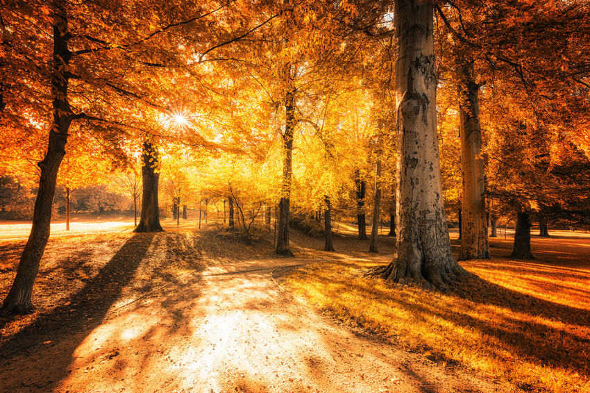 Autumn Autumn Collection Beauty In Nature Change Fall Forest Harz Harzmountains Land Landscape Nature No People Non-urban Scene Orange Color Outdoors Plant Plant Part Scenics - Nature Sunlight Tranquil Scene Tranquility Tree Tree Trunk Trunk WoodLand