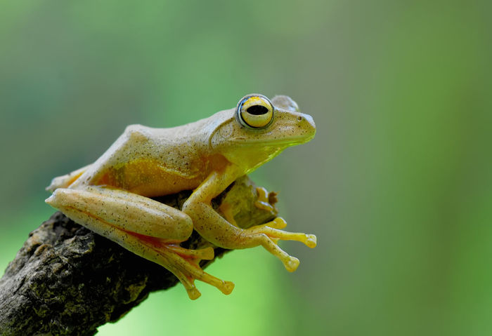 Animals In The Wild Macro Beauty Stage Wildlife & Nature Animal Head  Animal Photography Animal Themes Animal Wildlife Animals In The Wild Close-up Day Frogs Mammal Nature One Animal Outdoors Reptile Stagephotography Tree Wild Wildlife