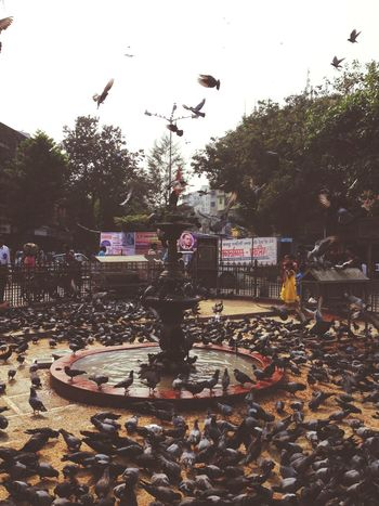 Mumbai MumbaiDiaries My Commute Mumbailocal India Photooftheday Taking Photos Photography Streetphotography Everydaylife Birds Pigeon Circle Dadar Fountain Water
