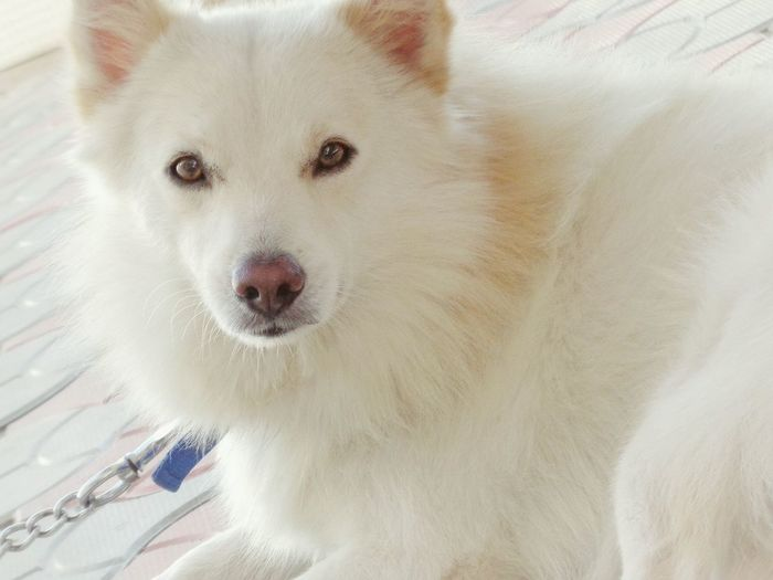 Summer Dogs I Love My Dog My Doggy Jerry ♥ Naughtynaughty Lovely <3 <3 <3 Had Fun Njoyn Like4like Cute Beast