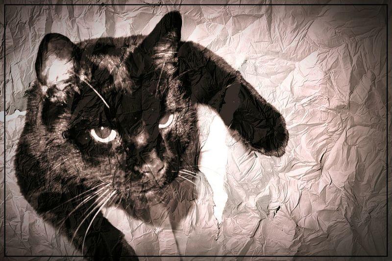 Mal wieder abhängen I Love Cats Cats Relaxing Monochrome Black & White Animals🐾 Black Cat