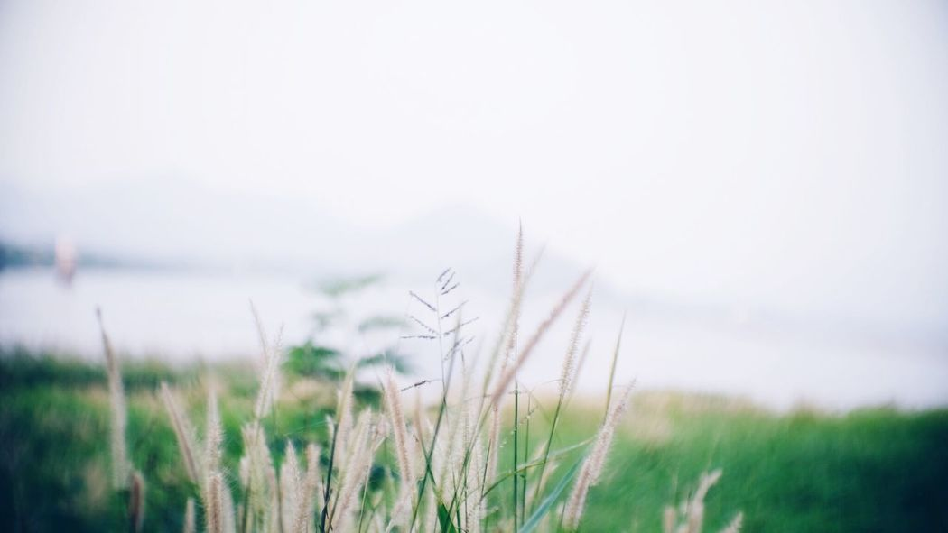 Plant Growth Tranquility Nature Sky Beauty In Nature Field Outdoors Copy Space Close-up Land Day Crop  Landscape Environment Clear Sky Focus On Foreground Grass No People Tranquil Scene