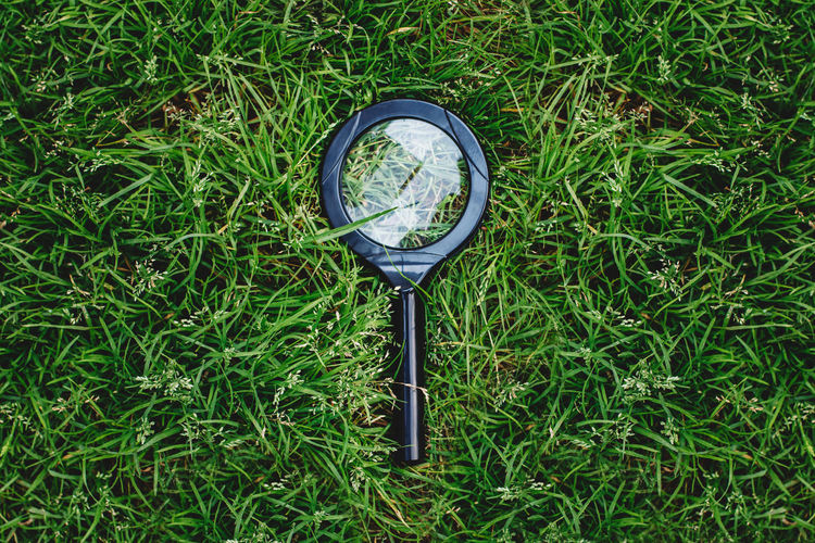 Closeup macro of magnifying glass loupe lying in green summer grass. view from top above