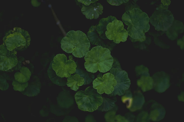 Beauty In Nature Close-up Day Fragility Freshness Green Color Growth Leaf Nature No People Outdoors Plant