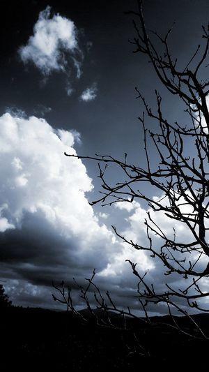 Flying Tree Silhouette Sky Animal Themes Cloud - Sky Full Moon Sky Only Moonlight Eclipse Moon Half Moon Telephone Line Telephone Pole Moon Surface First Eyeem Photo